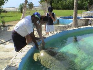Cuba Cayo Largo turtle