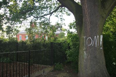 graffiti on tree